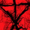 Test Blu-ray : Blair witch