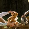 Test Blu-ray : Goodbye Christopher Robin