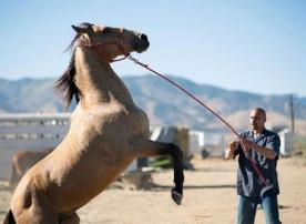 Critique : Nevada (Deuxième avis)