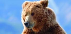 Test Blu-ray : Grizzly