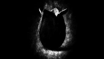 Alien Covenant : teaser + nouvelles images