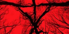 Test Blu-ray : Blair witch