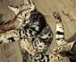 Test Blu-ray : Nos animaux : Doux dehors, sauvages dedans