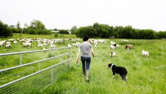 Critique : Jeune bergère