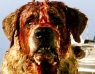 Test Blu-ray : Cujo