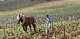 Critique : L'âme du vin